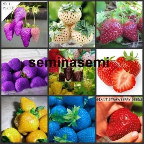 Portal Cool 300 Semi De Fresas coloreados 10 Variedad