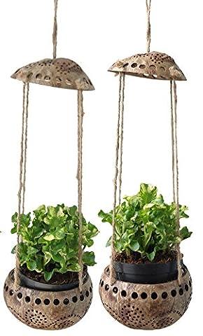 exotique Elegance 2pièces Jardin décoratifs Coquille de noix de coco à suspendre Fleur Pot de fleurs Diamètre 7,6cm.