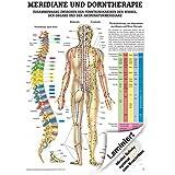 Meridiane u. Dorn Lehrtafel Anatomie 100x70 cm medizinische Lehrmittel