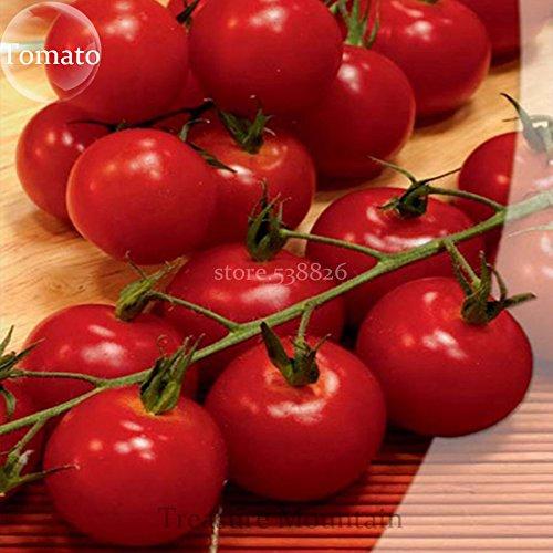 Seltene Erbstück Alicante (Vishenka, süße Millionen) Bright Red Truss Mini SM Tomatensamen, Profi-Pack 100 Samen / Packung