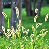 100pcs gramíneas ornamentales semillas, Bonsai adorable hierba ornamental