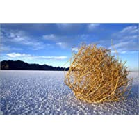 Stampa su legno 120 x 80 cm: Tumbleweed on the Bonneville Salt Flats di John Burcham / National Geographic