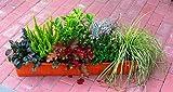 winterharte Balkonpflanzen im Set - 7 immergrüne Pflanzen für 80 cm Balkonkästen