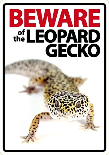 Beware of the Leopard Gecko - Flexi Portrait - Leopard Gecko Haustiere