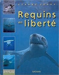 Requins en liberté