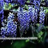20pcs misto semi di albero bonsai glicine 10 colore, semi di fiori in vaso, piante ornamentali perenni esterno per la casa e il giardino