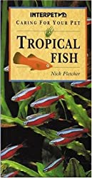 Caring for Your Pet Tropical Fish