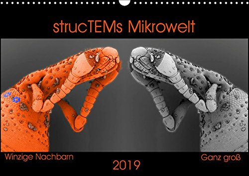strucTEMs Mikrowelt - Winzige Nachbarn ganz groß (Wandkalender 2019 DIN A3 quer): Coole Mikroskopie-Reise zu winzigen Nachbarn (Monatskalender, 14 Seiten ) (CALVENDO Wissenschaft)