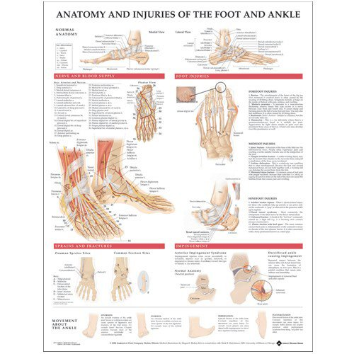 Anatomy and Injuries of the Foot and Ankle par  Anatomical Chart Company