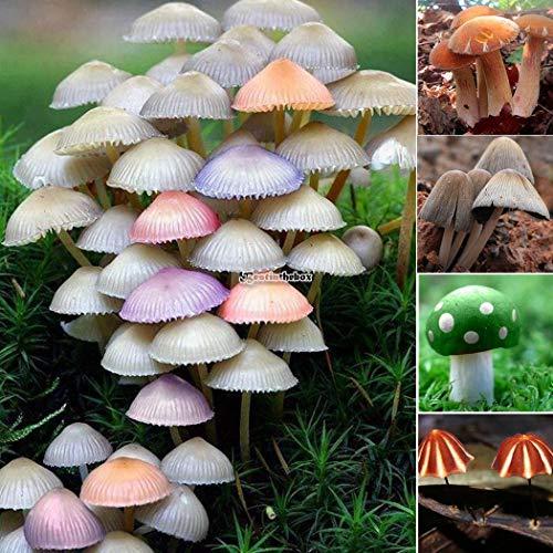 Plantree tipo 10: semi di funghi perenni salute commestibile semi di ortaggi piante da esterno b98b