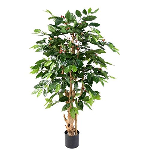 arbuste artificiel cafeier fleurs troncs noueux 150 - h : 150