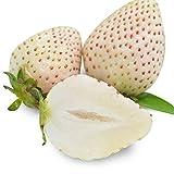 Singhi 20 Stücke Obst Sahne Erdbeere Samen Hausgarten Süße Köstliche Winterhart Obst Samen Sahne 2