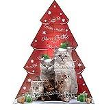 Image of Adventskalender für Katzen Katzenspielzeug Weihnachten