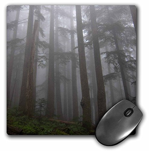 Danita Delimont - Matt Freedman - Fog - Olympic Peninsula, Washington, Mount Ellinore Trail. Trees in fog. - MousePad (mp_191494_1) (Mount Tree)