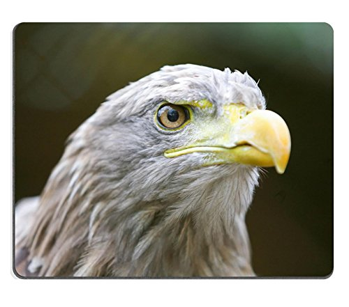 MSD Natural Rubber Gaming Mousepad IMAGE ID 36408825 A close up of a white tailed eagle (White-tailed Eagle)