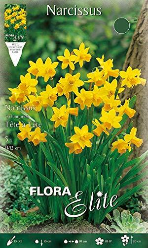 Bontanische Narzisse \'Tete a\'Tete\' reingelb, niedrig, Blumenzwiebeln für Herbstpflanzung