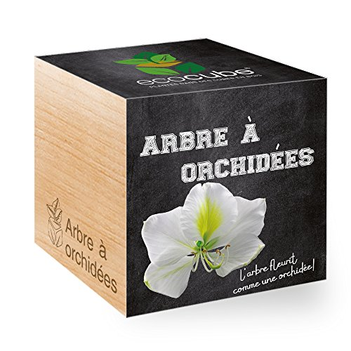 Feel Green Ecocube Arbre À Orch...