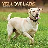 Yellow Labrador Retrievers - Weiße Labradore 2020 - 16-Monatskalender mit freier DogDays-App: Original BrownTrout-Kalender [Mehrsprachig] [Kalender] (Wall-Kalender)