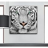 Bild Tiger weiß