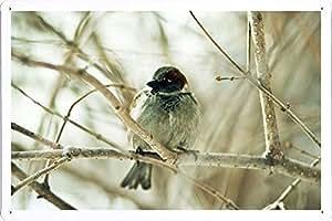 ARMVAS dÉCOR métal affiche poster affiche métallique avec plaque décorative 20 x 30 cm-passereau-oiseau établissement (sit 51032 sparrow bird branch 51032 sit)