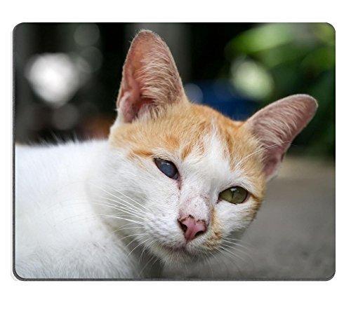 Jun XT Gaming Mousepad-ID: 42667962One Blind Katze liegend auf den Boden neben der Road