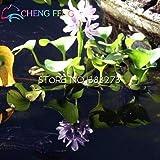 100 pcs / emballage New jacinthe d'eau Graines meilleur Germinate étang Aquarium Graines la maison d'intérieur Fissidens Fleurs Pots pour plantes Bonsai multicolores