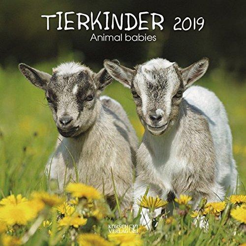 Tierkinder 2019: Broschürenkalender mit Ferienterminen. Babys von Tieren in süßen Bildern. 30 x 30 cm