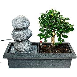 """Indoor-Bonsai mit Zimmer-Brunnen """"Balance"""" - 3 Kieselsteine - Easy Care System"""