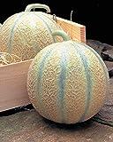 Risitar Graines - Rare Melon Rubens F1 précoce grande saveur, juteux et très sucrés, Fruitiers Graines et Potager Graines de légumes résistante au froid