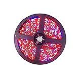 Tesfish La pianta LED coltiva la luce della striscia DC 12V IP20 Spettro pieno SMD 5050 Rosso blu 8: 1 luce della corda per l'acquario Serre pianta