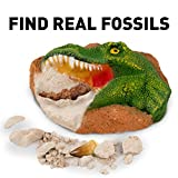 Dinosaur Dig Kit by National Geographic hergestellt von Discover with Dr. Cool