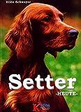 Setter heute (Das besondere Hundebuch)