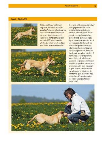 Hundeschule:  Verhalten formen mit dem Clicker - 9