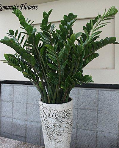 semillas-50particles-bolsa-arbol-del-dinero-balcon-tiesto-plantar-es-simple-de-florecimiento-tipo-de