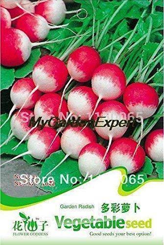 35pcs de vente Hot Multicolore Jardin Petit Radis Bonsai Graines de légumes Graines