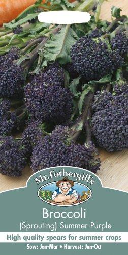 Mr Fothergills Pilzsporen, Gemüse Brokkoli SPROUTING Summer Purple 150 Samen