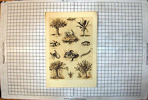Antiker Druck des Afrikanischen Drachenbaum-Heuschrecken-Lotus-Hauch-Additionsmaschinen-Skorpions Der Wild lebenden Tiere