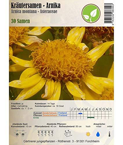 Semillas de hierbas - Arnika/Arnica montana/Arbo 30 semillas