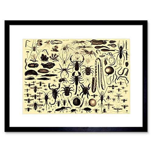 Book BROCKHAUS Efron Insect Spider Scorpion Russia Framed Art Print B12X11720