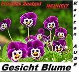 20x Gesicht Blume Katzen Auge Garten vier jahreszeiten Saatgut Frisch Samen #279