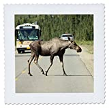 3dRose QS 164772_ 5Elch Crossing Road in Denali