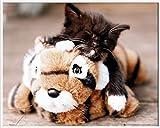 Diseño de mini-póster de gatitos de juguetes de piel de tigre + Empire