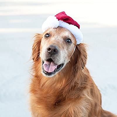 ZippyPaws Christmas Santa Dog Hat