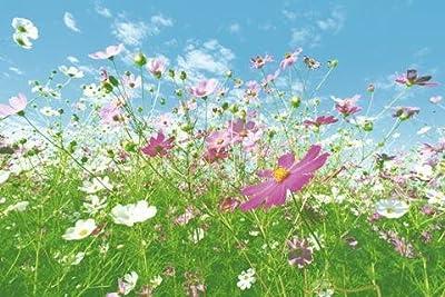 1art1 40559 Wiesen - Blumenwiese 8-teilig, Fototapete Poster-Tapete (368 x 254 cm) von 1art1 - TapetenShop