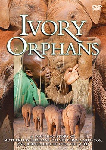 ivory-orphans-dvd-ntsc