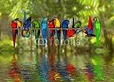 druck-shop24 Wunschmotiv: Talking Aras #114525884 - Bild auf Leinwand, Foto-Poster, Alu-Dibond, Acrylglas, Forex-Platte, Klebe-Folie (Leinwand - Keilrahmen 2 cm - 120 x 60 cm)