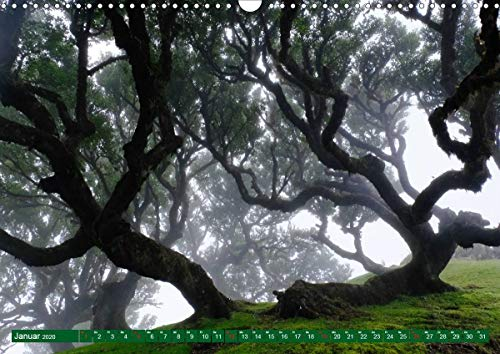 Madeira Blumeninsel im Atlantik (Wandkalender 2020 DIN A3 quer)