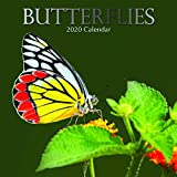 2020 Square Wall Calendar - Butterflies