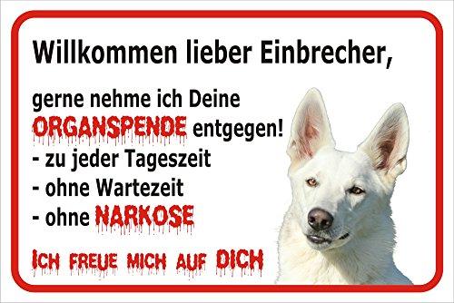 AdriLeo Schild Vorsicht WEIßER Schäferhund - Willkommen lieber Einbrecher 15x20cm oder 20x30cm (20x30cm)