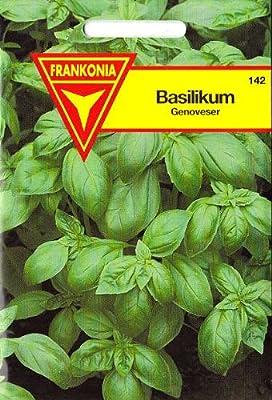 Basilikum, Genoveser, Ocimum asilicum, ca. 200 Samen von Philipp Klein GmbH bei Du und dein Garten